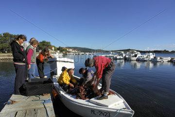 Kroatien - Insel Ilovik  Verkauf von Fisch