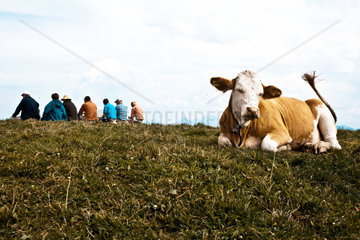 A cow in the foreground seems to enjoy a rest  while a group of wanderers sits in the backround also enjoying their freetime
