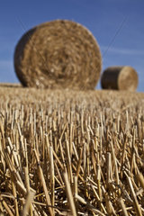 Straw  Roots with a bale of hay in the backround  vertical format