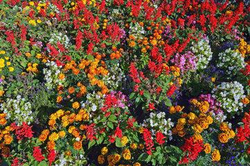 viele verschiedene Blueten auf einem sommerlichen Blumenbeet
