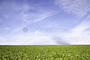 Blauer Himmel mit Wolken ueber einem gruenen Feld. Goldener Schnitt. Starker Kontrast