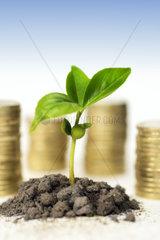 Gruener Spross und Geldmuenzen  Geldanlage