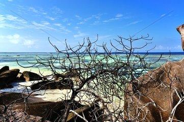 Felsen am Strand Anse Source d Argent auf La Digue  Seychellen