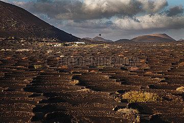 Viniculture - Lanzarote