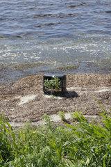 Strandgut auf Ruegen