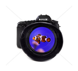Digital photo camera on white background Digital photo camera with clown fish