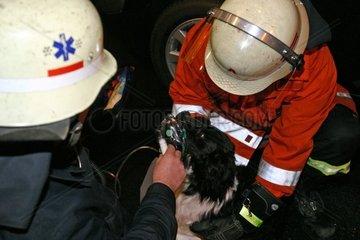 Technisches Hilfswerk bei der Rettung eines Hundes