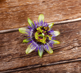 Passiflora caerulea  passionflower flower on wooden table
