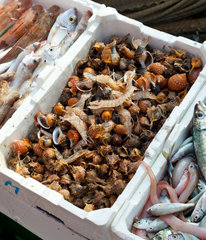 Fresh fish for sale at the market of the harbor