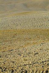 Felderlandschaft  Toskana