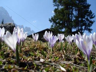 Geislergruppe  Villnoess  South Tyrol  Italy