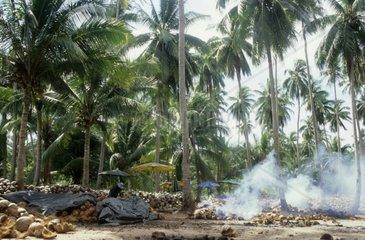 Kokosnuss Verwertung  Ko Phangan  Thailand
