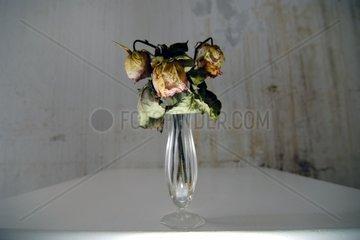 Vertrocknete Rosen in Vase