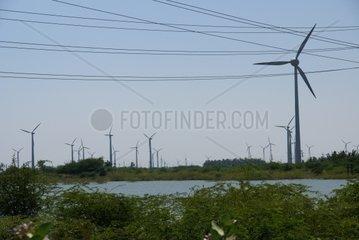 Windraeder bei Kovalam  Indien
