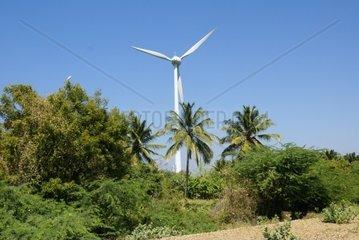 Windrad bei Kovalam  Indien