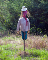 Photo of cute scarecrow in the field