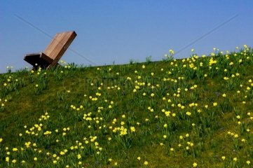 Meadow and Chair