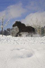 Pferd im Neuschnee