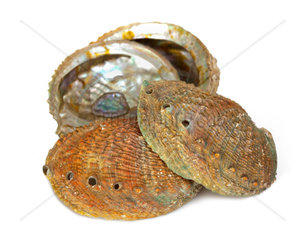 Four abalone shells on a white background