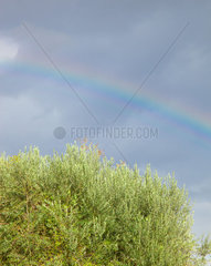 Rainbow colored with olive tree on blue sky