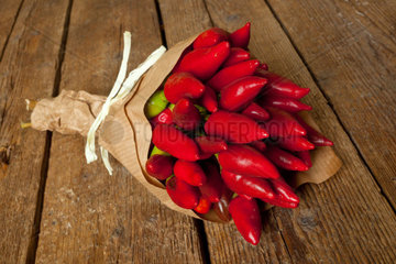 Bunch of fresh small red hot pepper made in Salento  Puglia  Italy