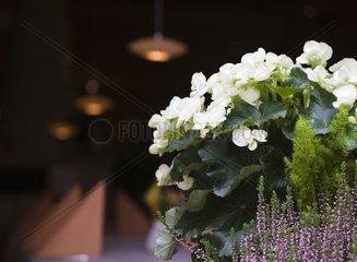 Blumen vor Restaurant