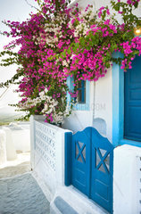 Flowers bougainvillea in Santorini island with typical architecture
