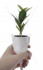 Pflanze waechst aus Stromkabel  Hand