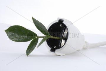 Pflanze waechst aus Stromkabel