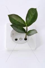 Pflanze waechst aus Steckdose