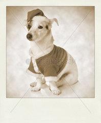 Vintage sepia polaroid with dog as santa