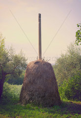 Photo of hay in stack in the field