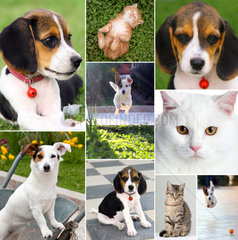 Collage of different cute pets  dogs and cats
