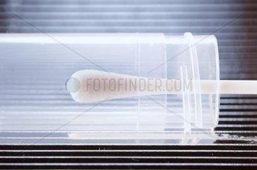 Wattestaebchen fuer DNA Test und Vaterschaftstest
