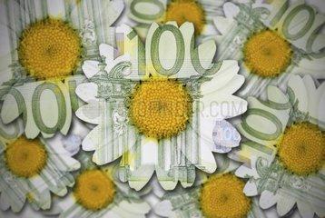 Blumen aus Hundert Euro Scheinen  Nachhaltigkeit