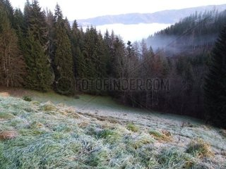 Rauhreif Wiese im Wald