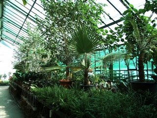 Palm Green House