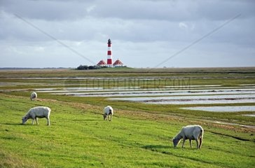 Lighthouse from Westerhever  Germany  Schleswig Holstein  St. Peter-Ording  Westerhever