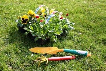 Stiefmuetterchen und Bellis mit Gartengeraeten