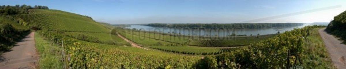 Weinberge Rhein