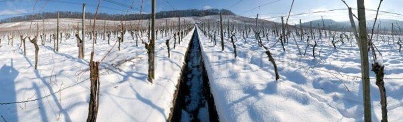 Weinberge Schnee
