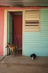 Cat and dog on curb outside colorful building