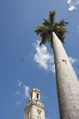 Palm tree and bell tower against blue sky  low angle view