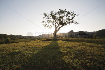Sun setting behind tree in rural landscape