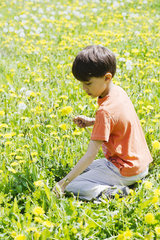 Boy picking dandelions in field