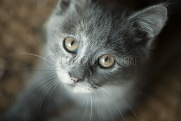 Kitten  portrait