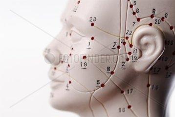 Kopf mit Akupunkturpunkten
