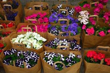 Blumen in braunen Einkaufstueten