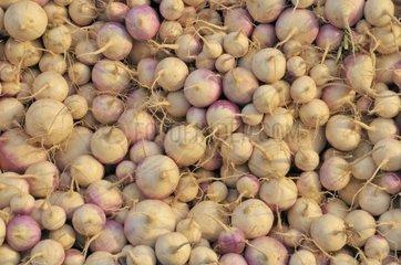 Zwiebeln  Markt fuer Obst- und Gemuese in Inezgane  einem wichtigen Umschlagplatz suedlich von Agadir  Marokko  Afrika