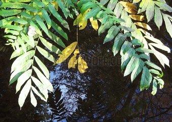 Zweige Herbstblaetter